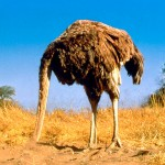 Don't Feed the Ostrich!